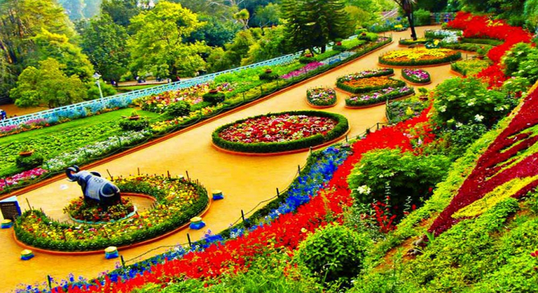 Chennai to Ooty Package